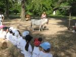 colegio bilingue san patricio moreno visita a granja